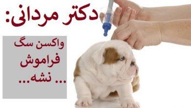 تصویر از واکسیناسیون سگ در شیراز | آدرس + تعرفه سال 1399