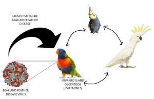 ایدز پرندگان چیست
